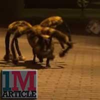 Spider Dog